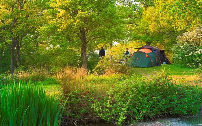 St Ives Farm Campsite | Ashdown Forest